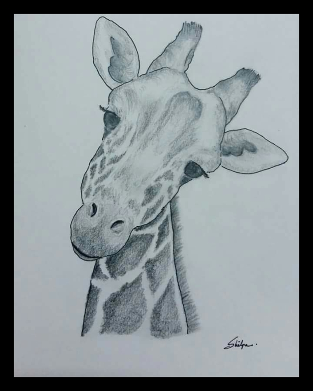 Pencil shading animals